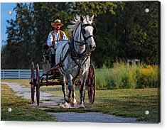 Horse And Buggy Acrylic Print by Lone Dakota Photography