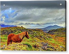 Acrylic Print featuring the photograph Horse And Mountains by Scott Mahon
