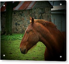 Horse And Shed Acrylic Print by Michael L Kimble