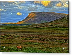 Acrylic Print featuring the photograph Horse And Sky by Scott Mahon