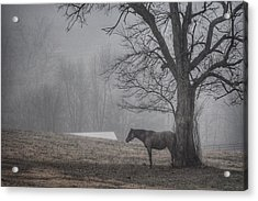 Horse And Tree Acrylic Print