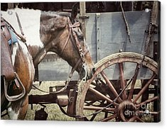 Horse And Wheel Acrylic Print by Steven Digman