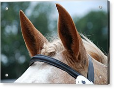 Acrylic Print featuring the photograph Horse At Attention by Jennifer Ancker
