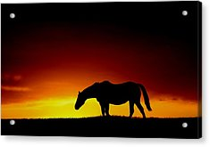 Horse At Sunset Acrylic Print