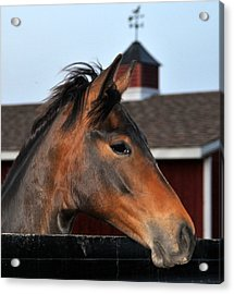 Horse Acrylic Print by Brian Foxx