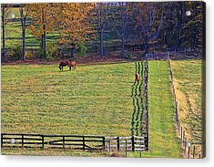Horse Country # 2 Acrylic Print