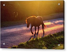 Horse Crossing The Road At Sunset Acrylic Print