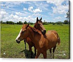Horse Cuddles Acrylic Print