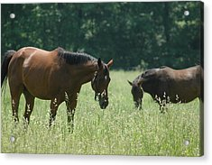 Horse Dreams Tall Grass Acrylic Print by William A Lopez