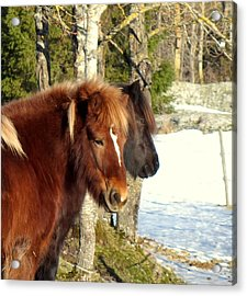 Horses With Peace In Their Mind  Acrylic Print by Hilde Widerberg