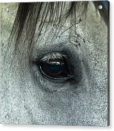 Horse Eye Acrylic Print by John Greim