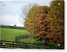 Acrylic Print featuring the photograph Horse Farm Country In The Fall by Sumoflam Photography