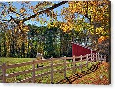 Horse Farm In Autumn - Surry Nh Acrylic Print