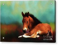 Horse Foal Acrylic Print by Suzanne Handel