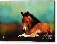 Horse Foal Acrylic Print