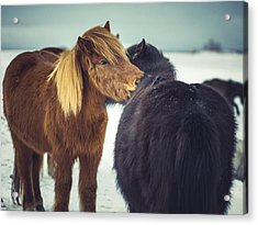 Horse Friends Forever Acrylic Print