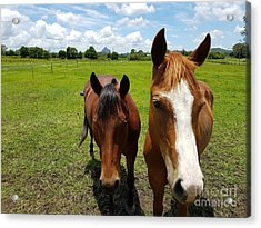 Horse Friendship Acrylic Print
