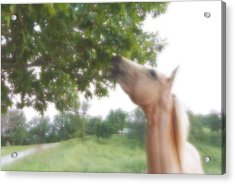 Acrylic Print featuring the digital art Horse Grazes In A Tree by Jana Russon