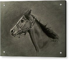 Horse Head Acrylic Print by Michael Trujillo