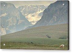 Horse Heaven.. Acrylic Print