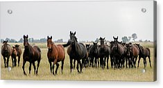 Horse Herd On The Hungarian Puszta Acrylic Print