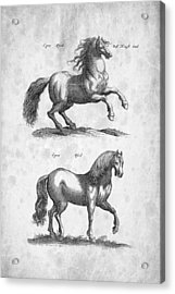 Horse Historiae Naturalis 1657 Acrylic Print by Aged Pixel