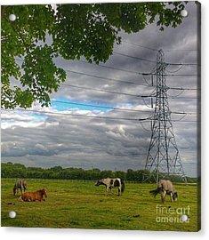 #horse #hobby #horses #equine Acrylic Print
