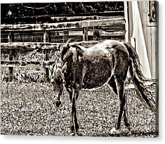 Acrylic Print featuring the photograph Horse In Black And White by Annie Zeno