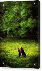 Horse In Flowers Acrylic Print