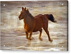 Horse In Motion Acrylic Print by James Steele