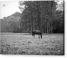 Horse In Pasture Acrylic Print