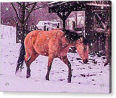 Horse In Snow Acrylic Print