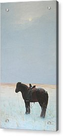 Horse In Snowfield  Acrylic Print