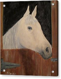 Horse In Stall Acrylic Print by Patricia Cleasby