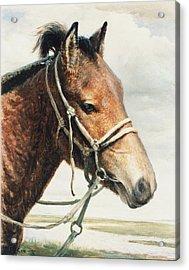 Horse Acrylic Print by Ji-qun Chen