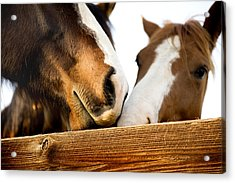 Horse Kisses Acrylic Print by Michelle Shockley