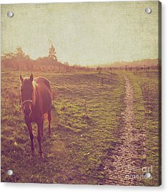 Acrylic Print featuring the photograph Horse by Lyn Randle