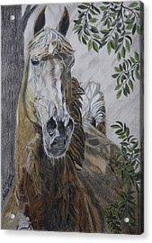 Acrylic Print featuring the drawing Horse by Melita Safran