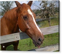 Acrylic Print featuring the photograph Horse by Michael Albright