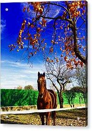 Horse Acrylic Print by Niki Mastromonaco