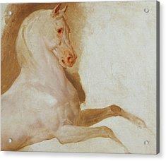 Horse Of Joachim Murat Acrylic Print by Baron Antoine Jean Gros