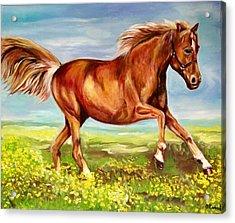 Horse On A Field  Acrylic Print by Olga Koval