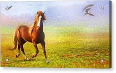 Horse On The Prairie Acrylic Print by Georgiana Romanovna