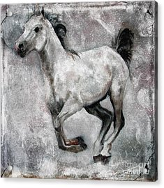 Acrylic Print featuring the painting Horse Painting Stallion Lipizzaner by Ginette Callaway
