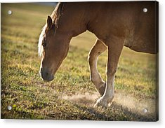 Horse Pawing In Pasture Acrylic Print by Steve Gadomski