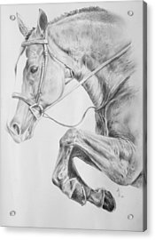 Horse Pencil Drawing Acrylic Print by Arion Khedhiry