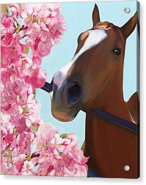 Horse Pink Blossoms Acrylic Print by Julianne Ososke