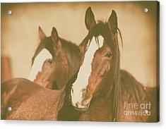 Acrylic Print featuring the photograph Horse Portrait by Ana V Ramirez