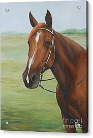 Horse Portrait Acrylic Print by Charlotte Yealey