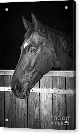 Acrylic Print featuring the photograph Horse Portrait by Delphimages Photo Creations
